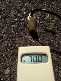 Soil Temps Raised Bed 05-20-2017